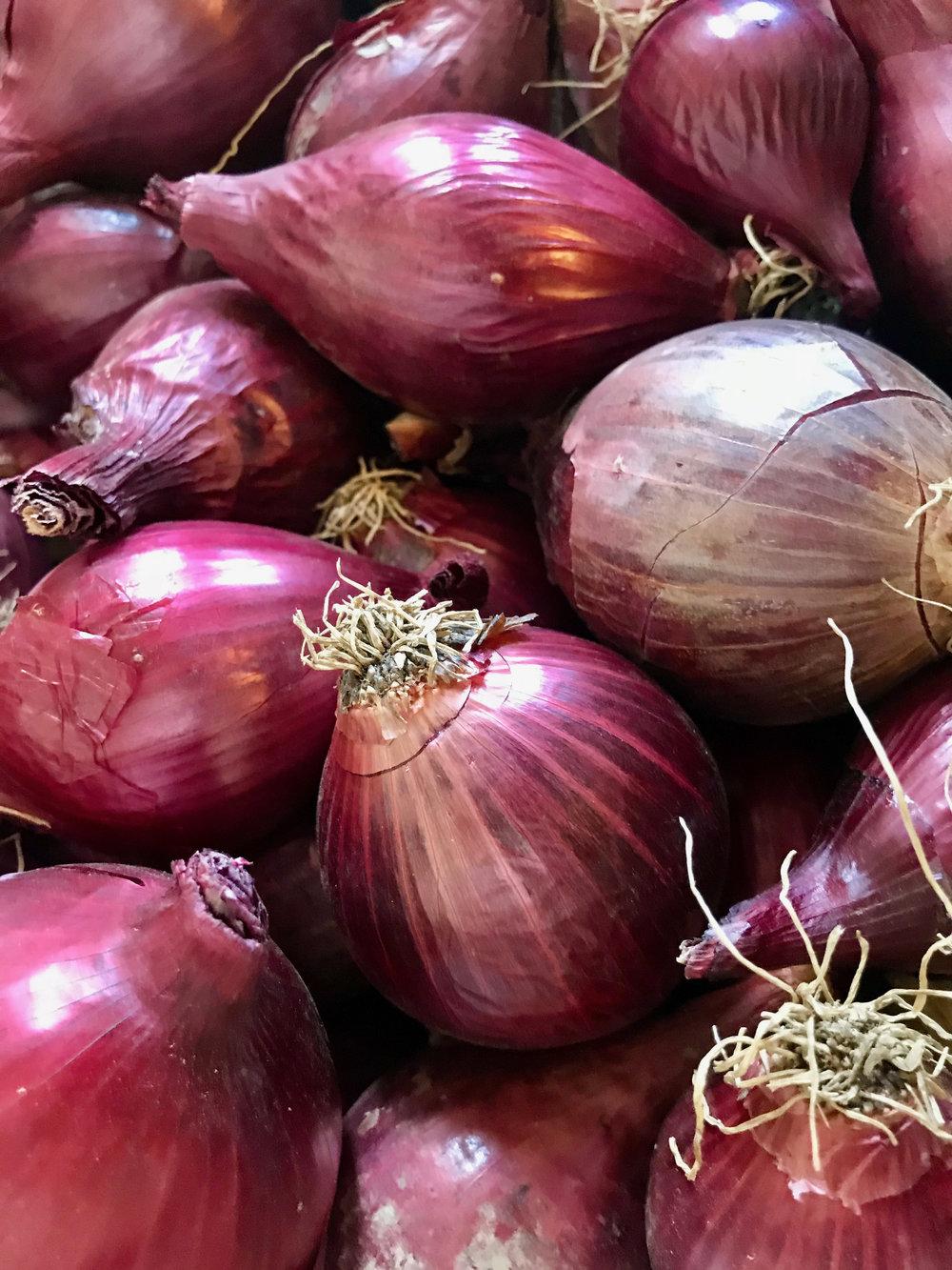 Purple Onions /  Stone Hollow Farmstead