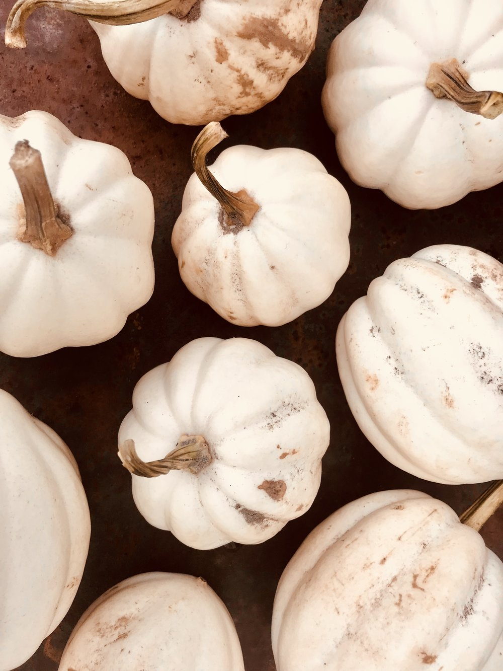 White Acorn Squash /  Kentucky
