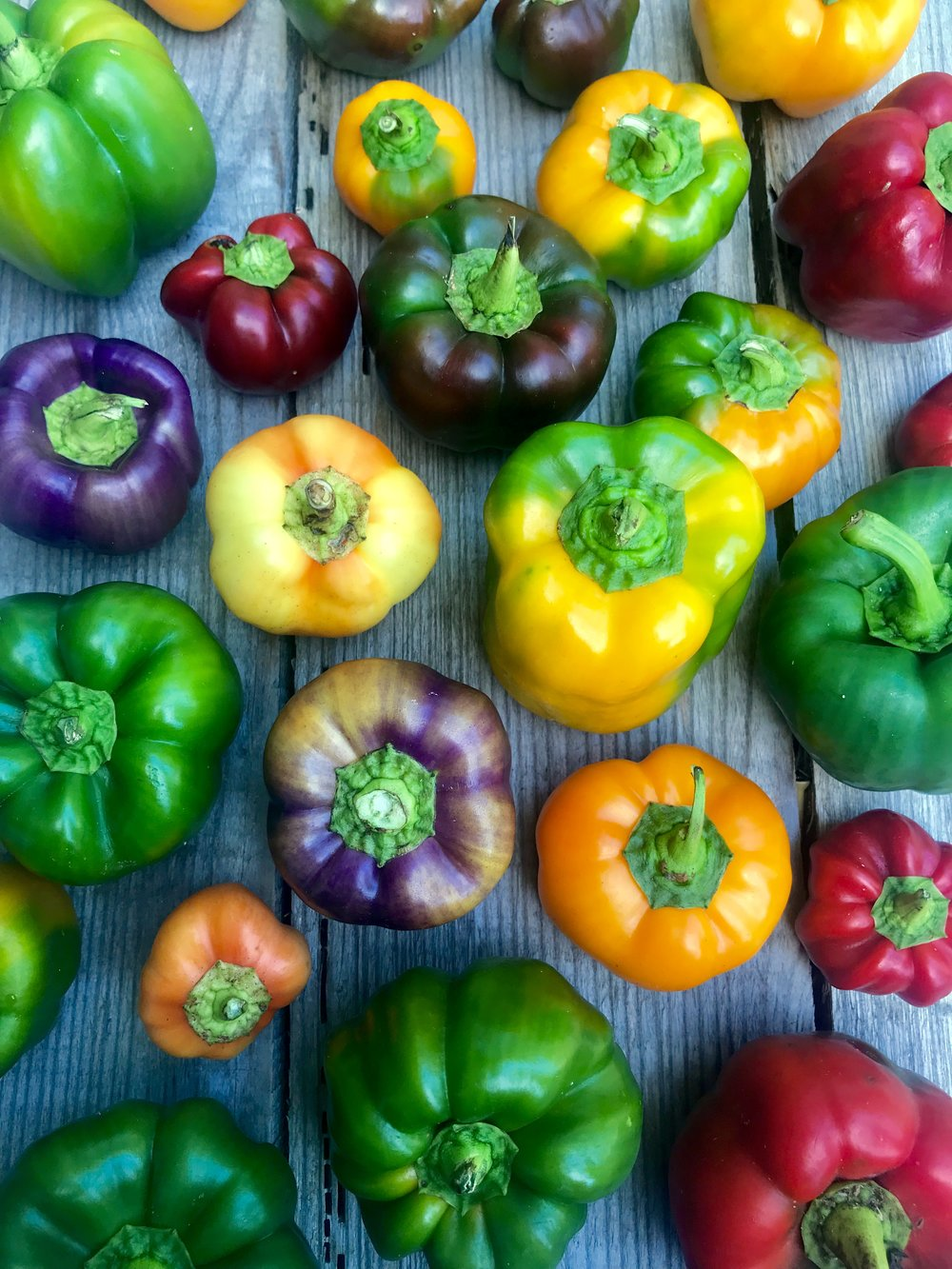 Sweet Bell Peppers  / Hamm Farm