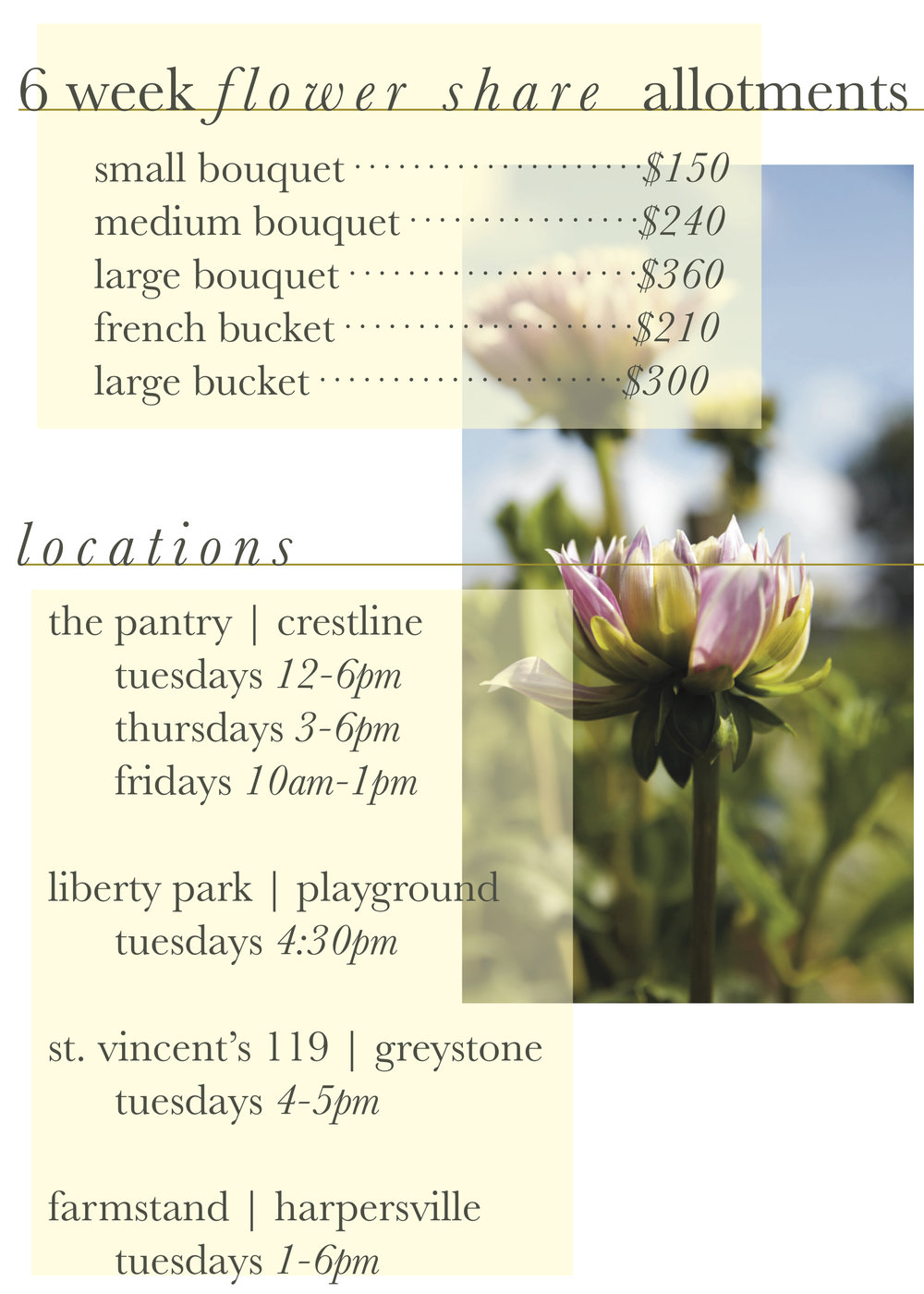 6 week flower share allotments.jpg