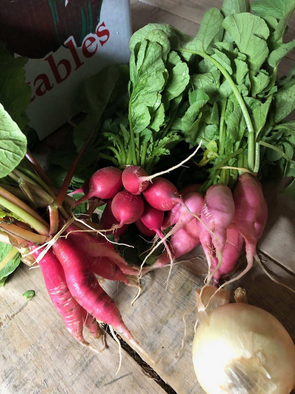 Radishes /  Belle Meadow