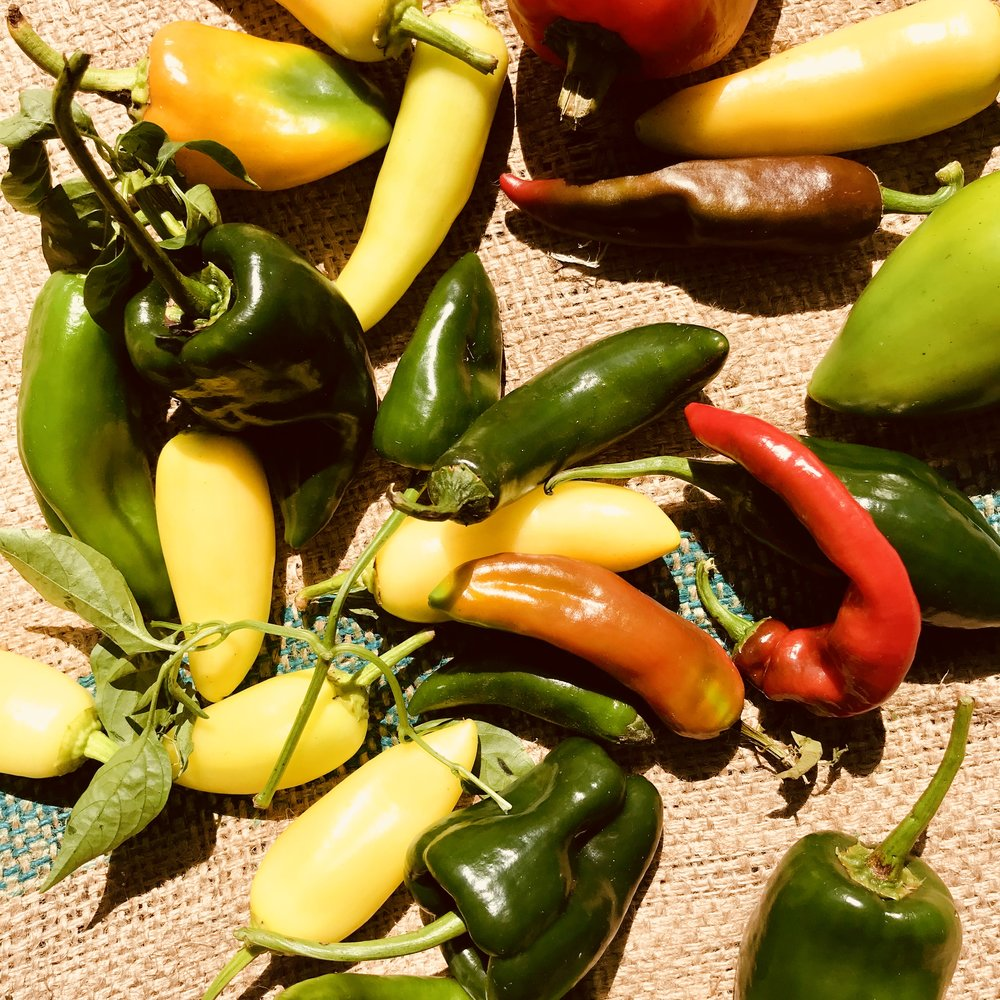 Peppers /  Stone Hollow Farmstead