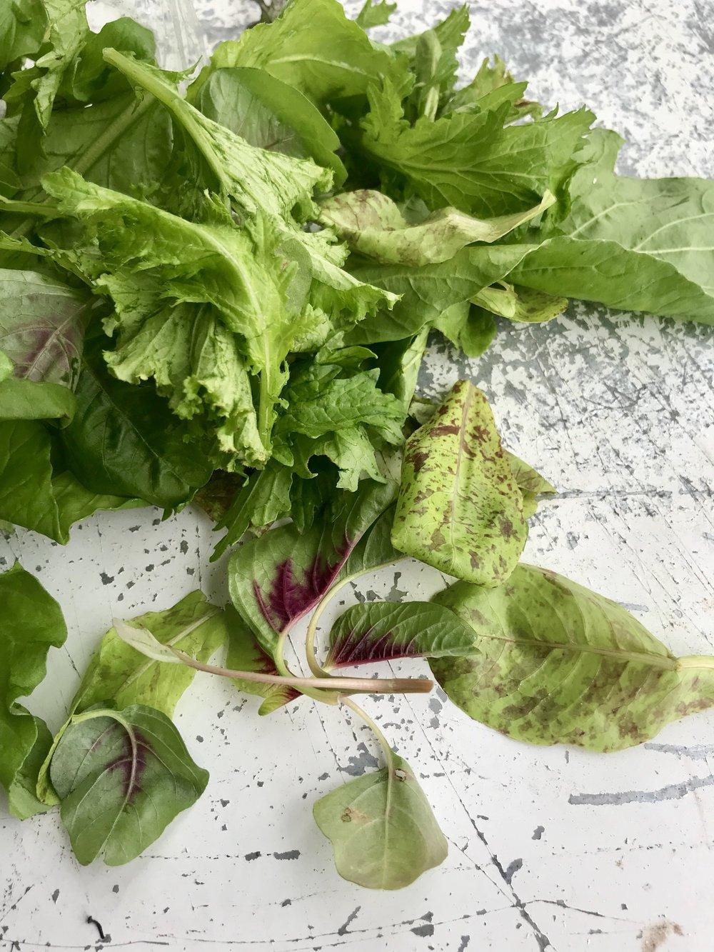 Salad Mix /  Stone Hollow Farmstead