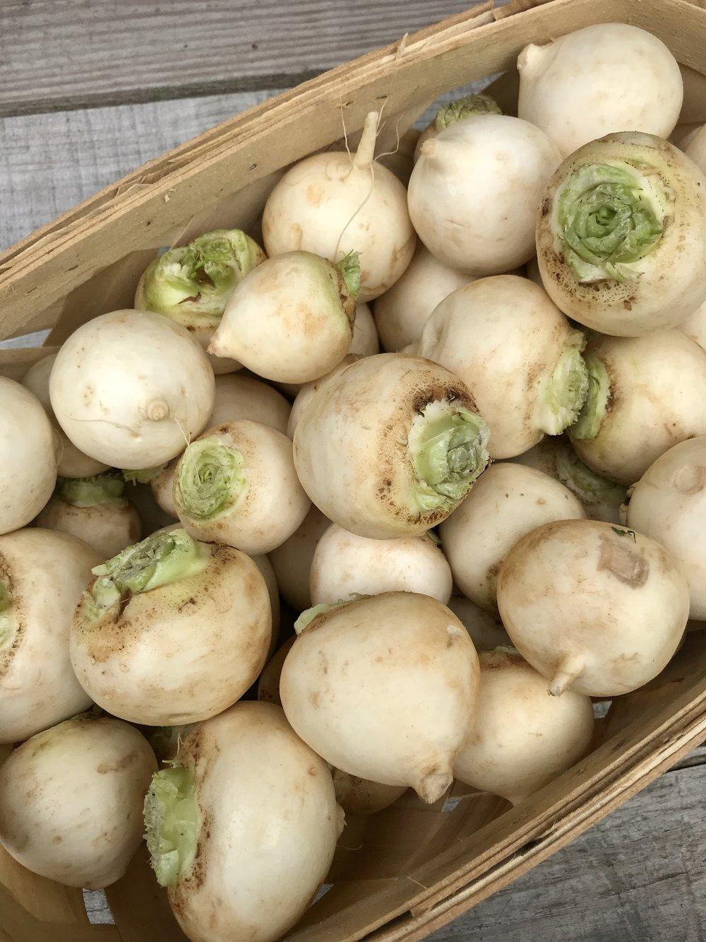 Hakurei Turnips  / Belle Meadow Farm