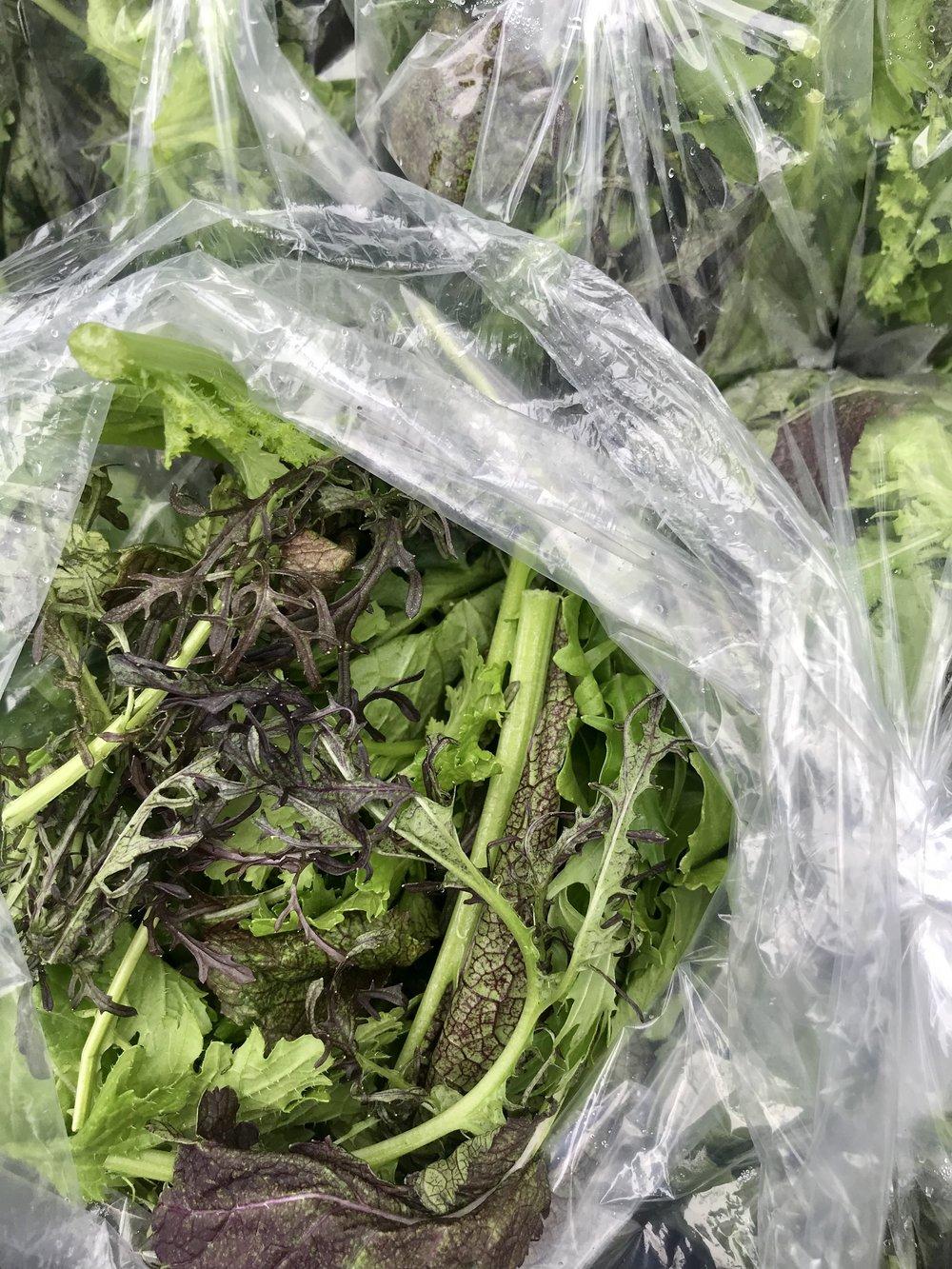 Elegance Salad Greens /  Stone Hollow Farmstead