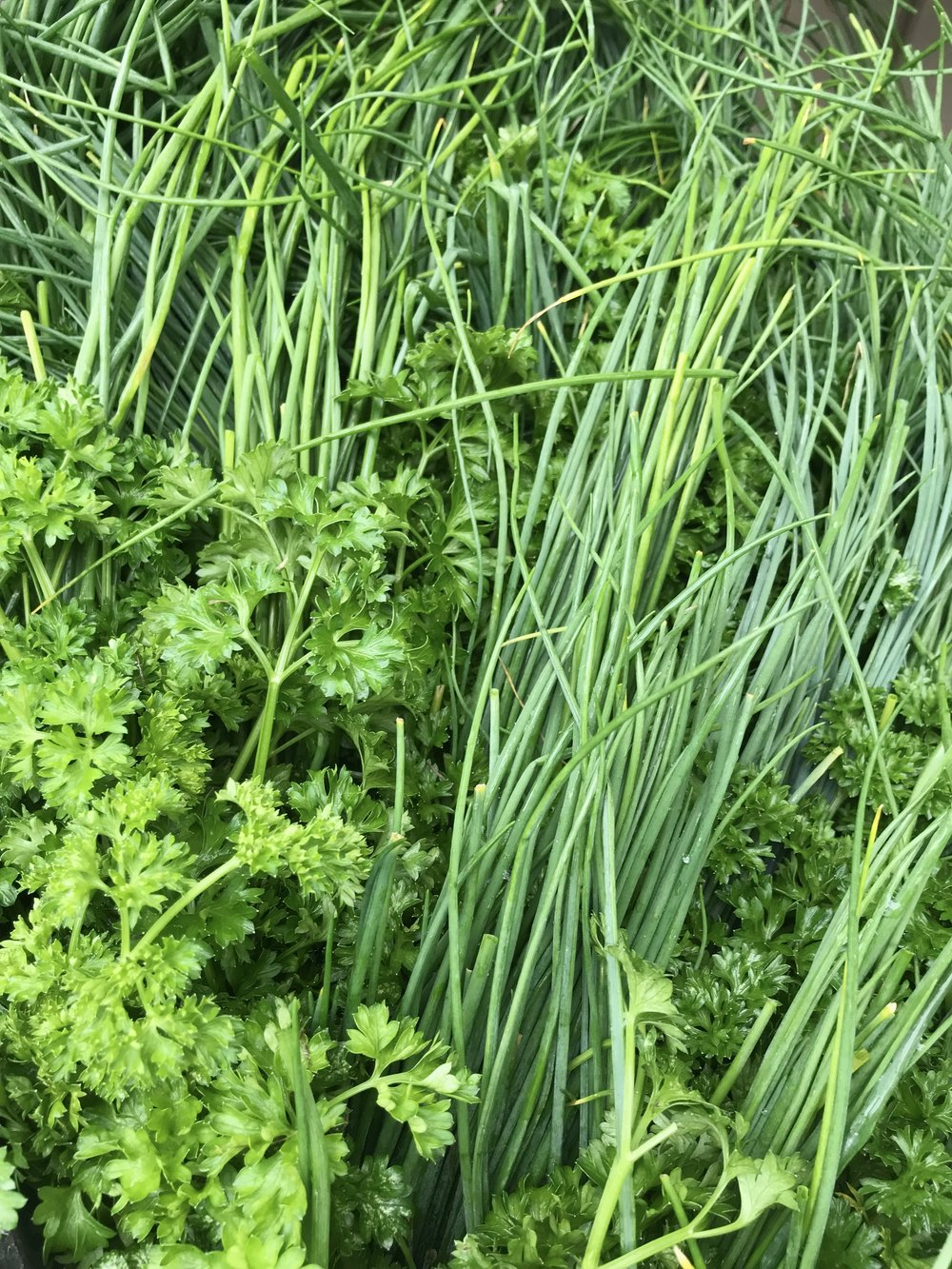 Dill and Parsley Herb Bundle /  Stone Hollow Farmstead