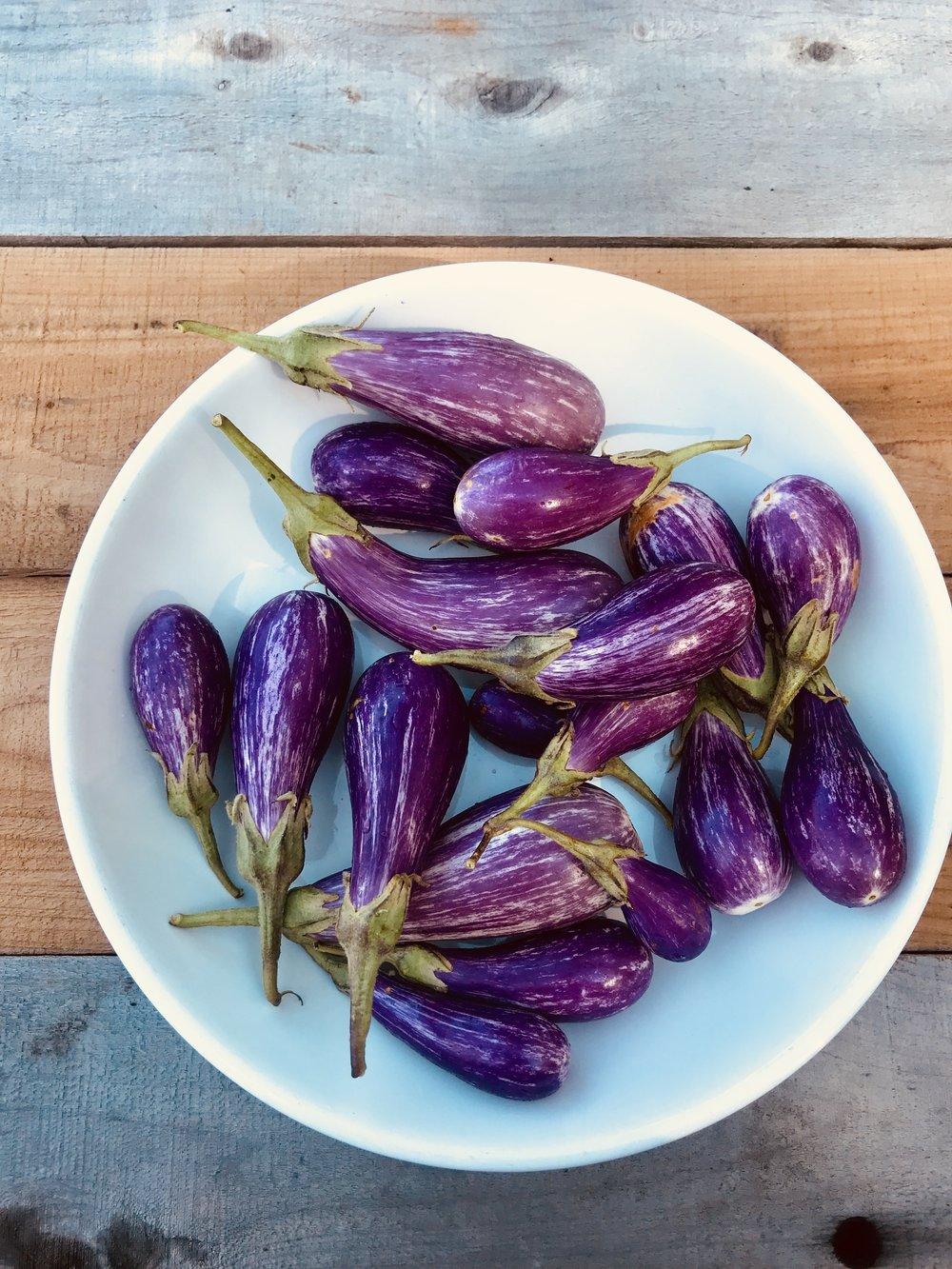 Fairytale Eggplant /  Belle Meadows