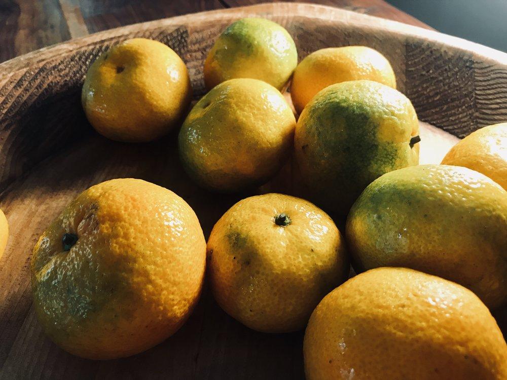 Satsumas /  Hatcher Citrus Farm