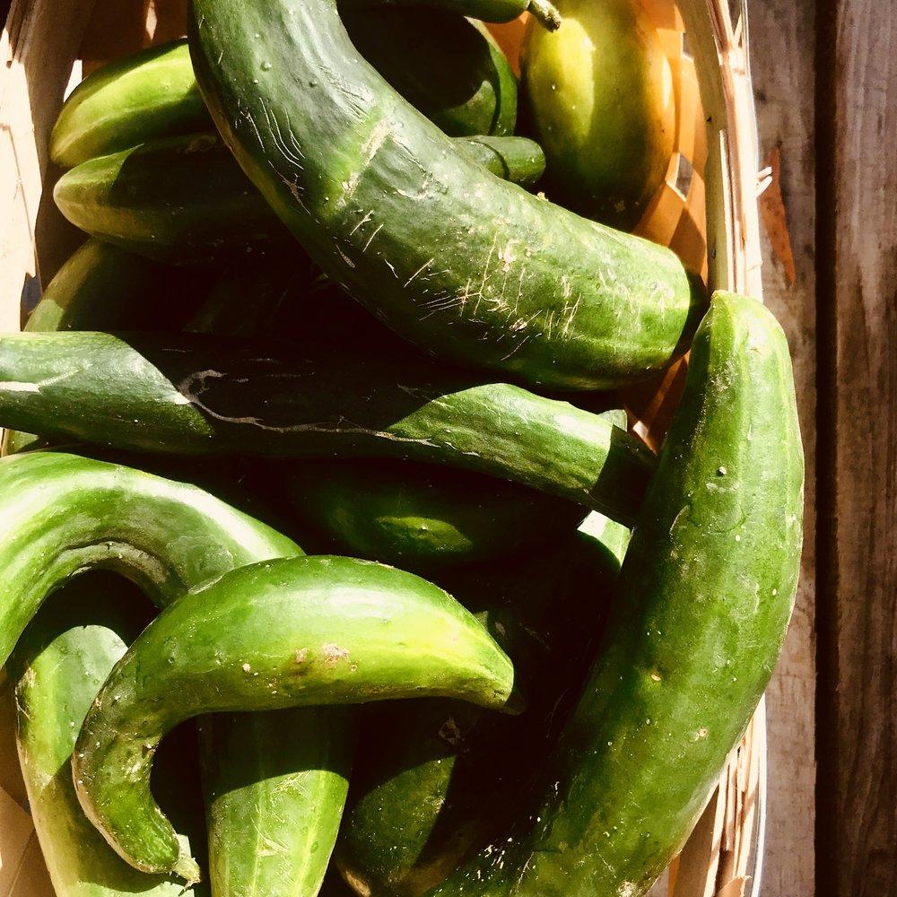 Cucumbers  / Stone Hollow Farmstead