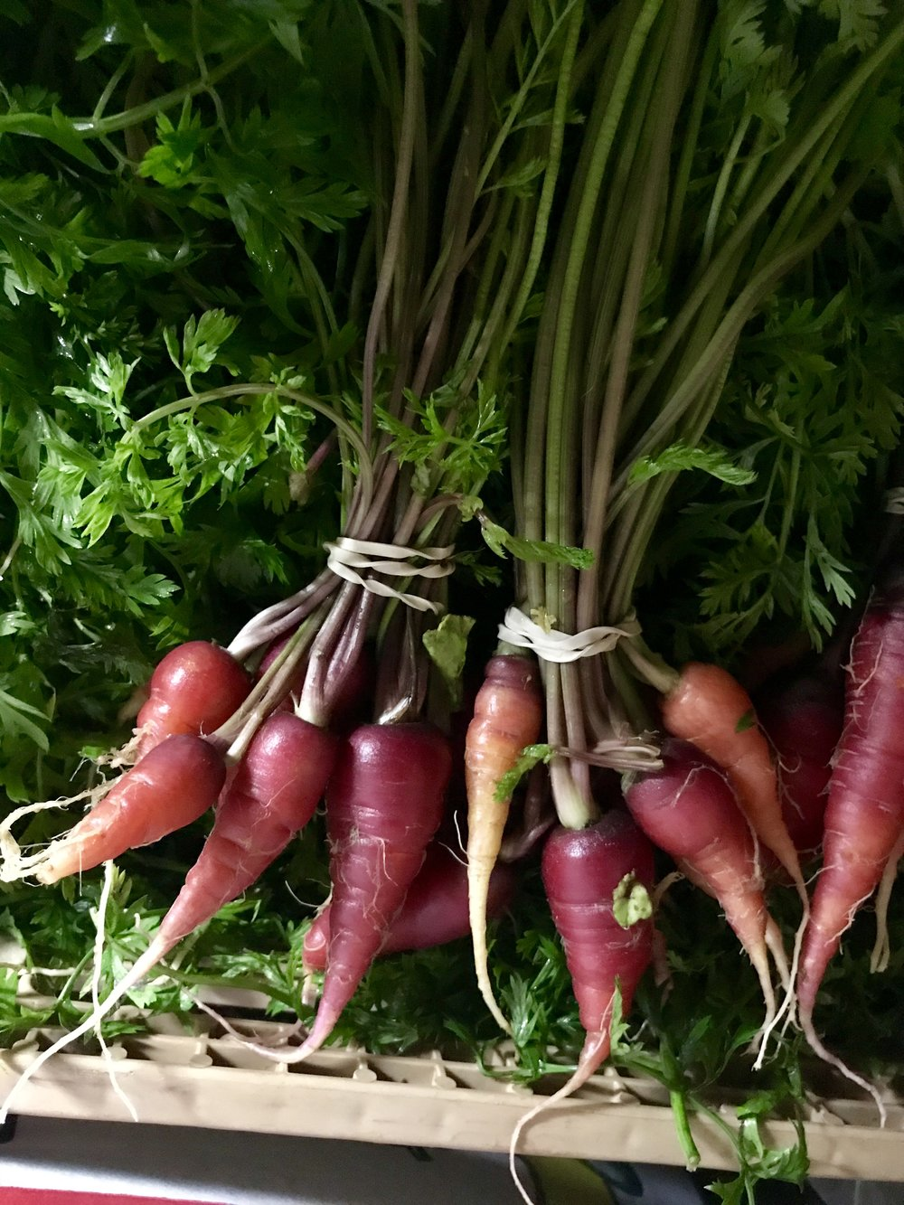 Carrots /  Stone Hollow Farmstead