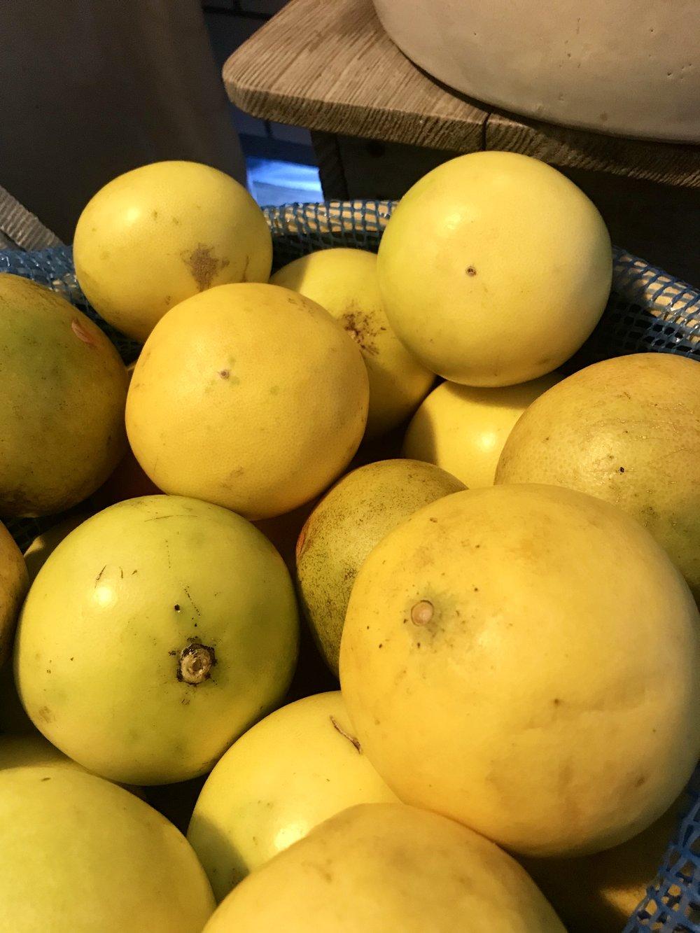 Grapefruit  / Apalachicola