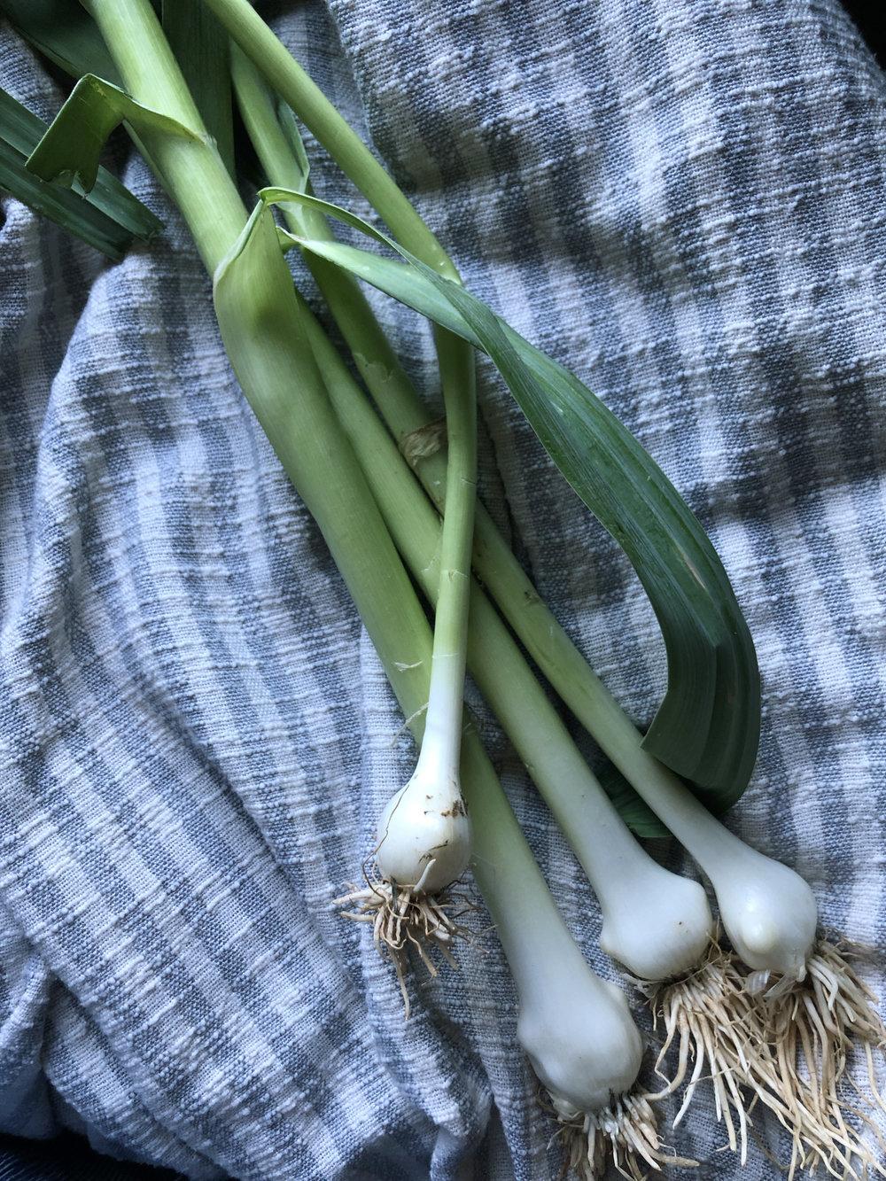 Green Garlic  /   Hamm Farms - Cullman, Alabama