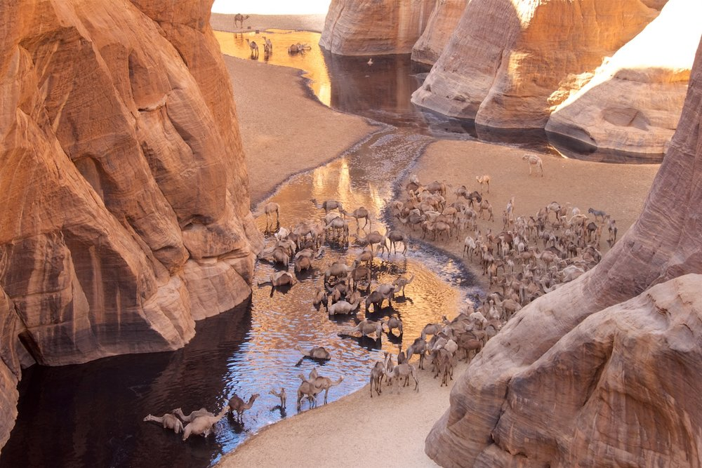 camel_oasis.jpg