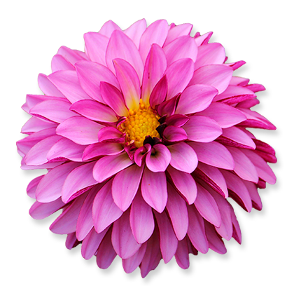 flower_05.png