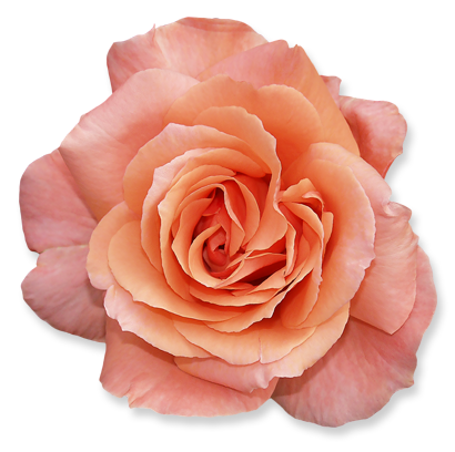 flower_09.png