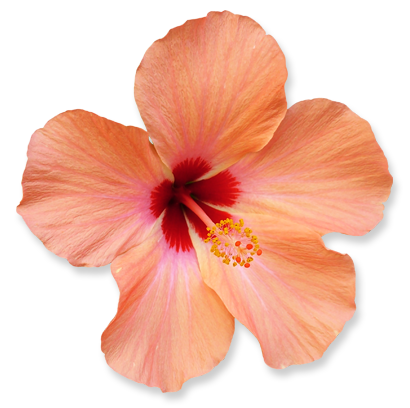 flower_10.png