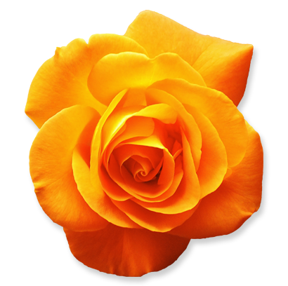 flower_11.png