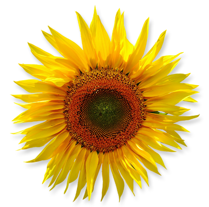 flower_14.png