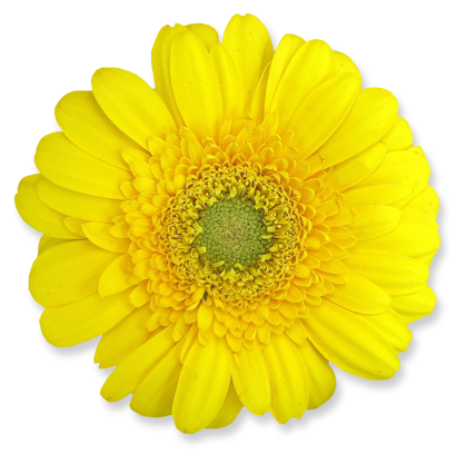 flower_15.png