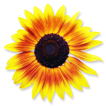flower_16.png