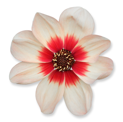 flower_23.png