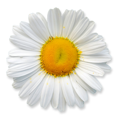 flower_24.png