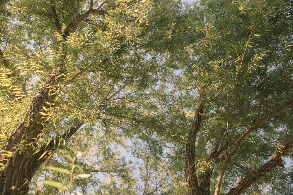 Gar-20.jpg