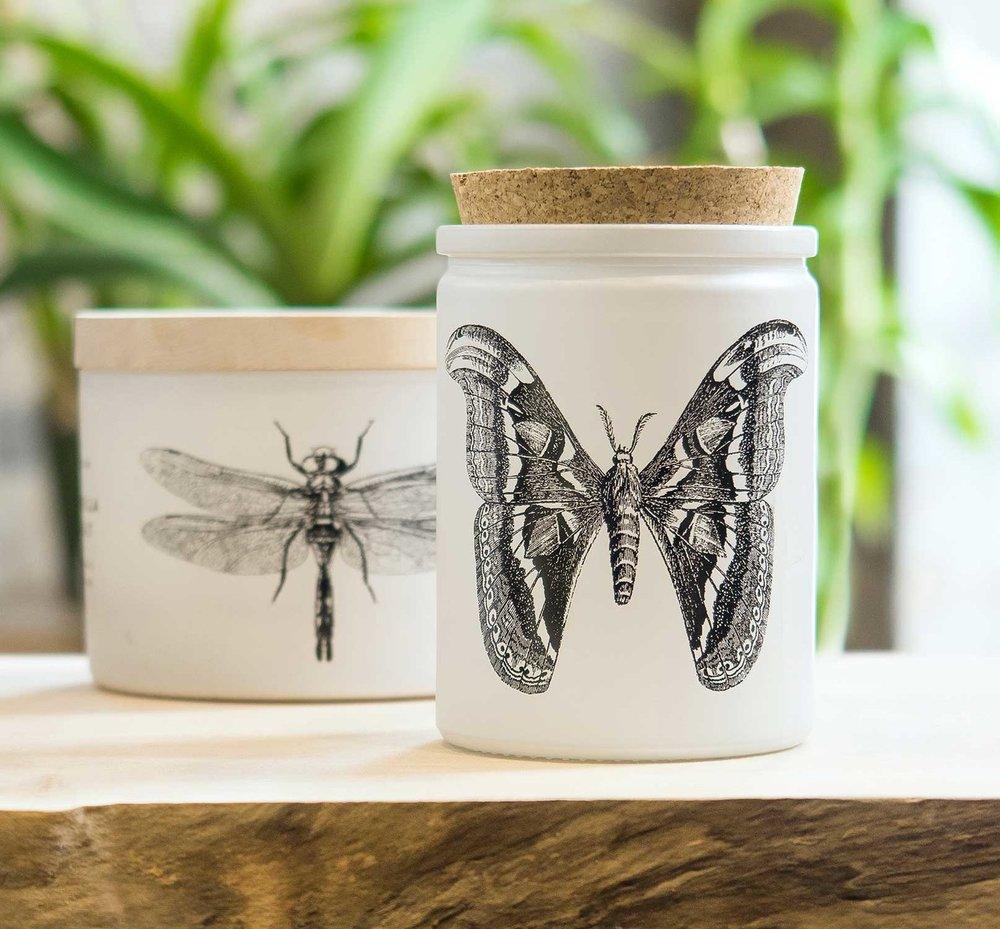 citronella.moth.dragonfly.jpg