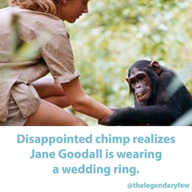 """Disappointed chimp realizes Jane Goodall is wearing a wedding ring."" #thelegendaryfew * * * #fakenews #janegoodall #chimpanzee #science #chimp #animalkingdom #animal #zoology #biology #primates #meme #love #wedding"