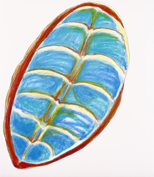"Carapace: Chiton XII, 24.5"" x 30"""