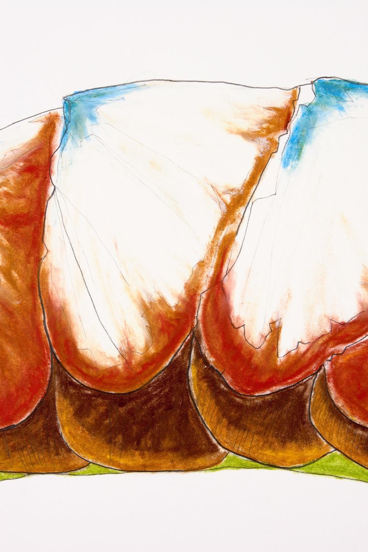 Carapace: Chiton XV, detail