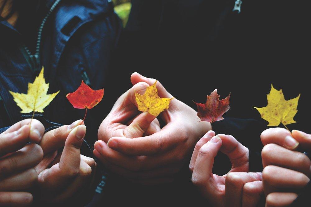 löv i olika färger.jpg