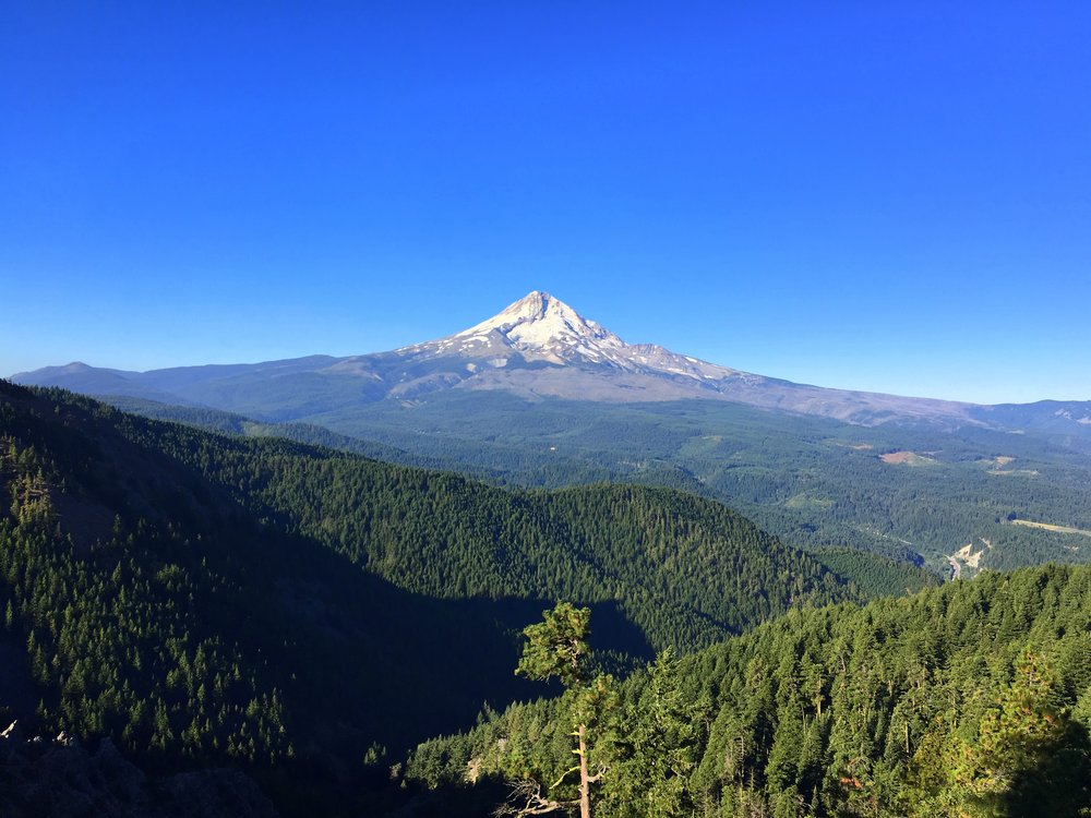 Mt. Hood from Surveyor's Ridge Trail