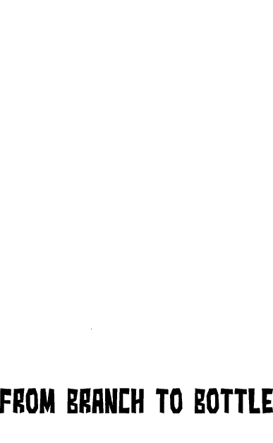 Wildcide San Jose Broofest