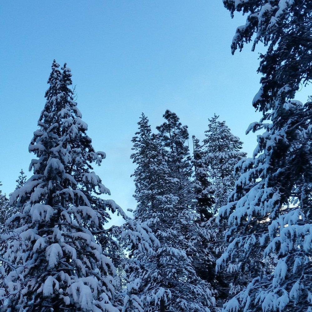 Snowy Trees.jpg
