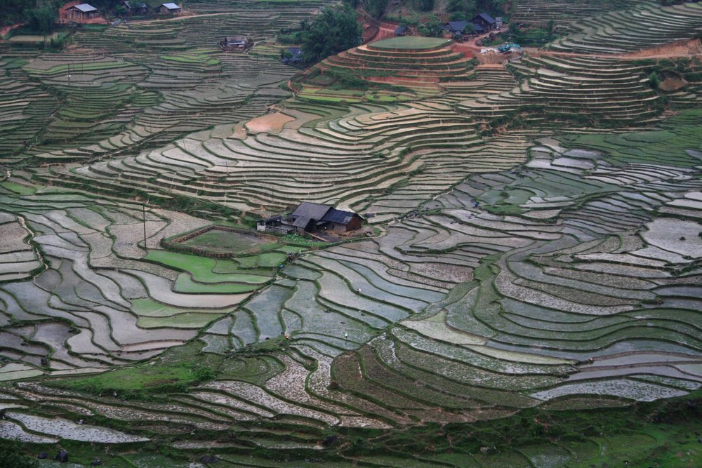Sapa Terraces 1.jpg