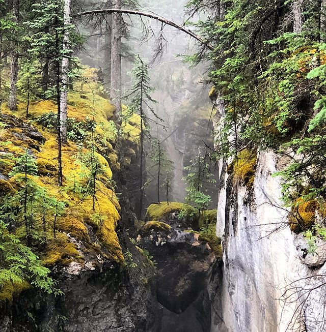 Guiding my trips again through the Rockies for the summer. This rock is wedged in between the two sides of Maligne Canyon near Jasper. Beautiful colours and nice mist. Www.livingfreerange.co  #jasper #travel #travelling #aroundtheworld #rockymountains #malignecanyon #livingfreerange #alberta #jaspernationalpark #maligne #canyon #jasperalberta #instatravel #lovetraveling