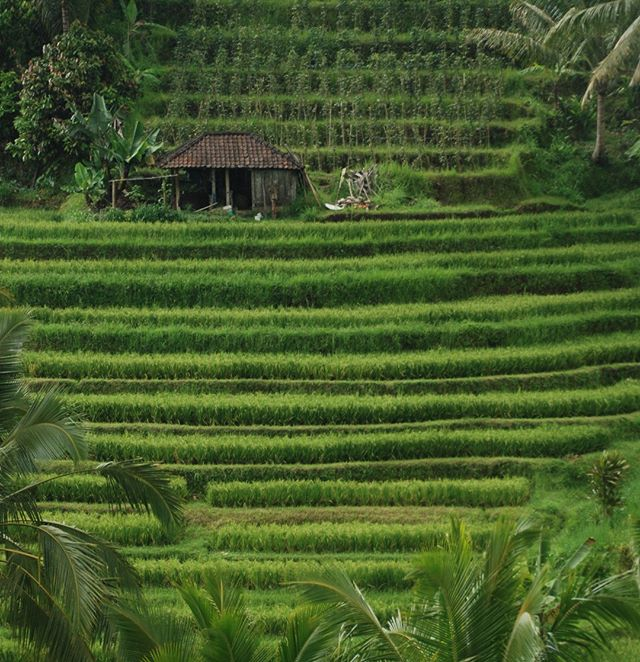 The Jatiluwah Rice Terraces in Bali are a Unesco World Heritage Site. It's quite peaceful to take a walk through the rice paddies and chat with the local farmers along the way. Stunning green colours!