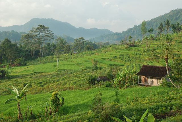 In the small town of Sideman, the peaceful morning light brightens the rice terraces on this homestead.  We spent a couple of enjoyable nights in this little Balinese village touring the countryside.  At the foot of Mt Agung, this village just feels very authentic and the masses of tourists have not yet found this gem.  The many shades of green that encompass this area are absolutely beautiful.  Join us on our next trip to Bali www.livingfreerange.co