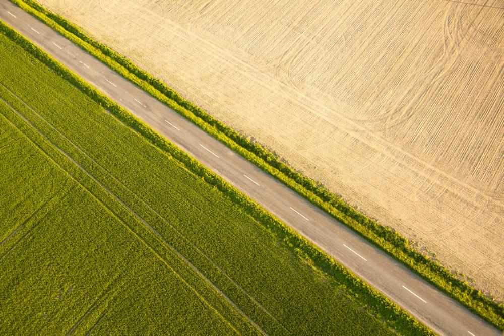 fields 3.jpg