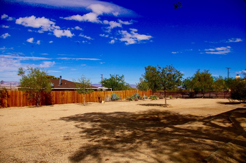 Pine Spring Side yard