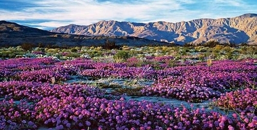 rent29.com shares wildflower updates - spring 2017 JTNP