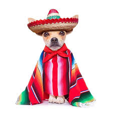 Happy Cinco de Mayo from  www.Rent29.com
