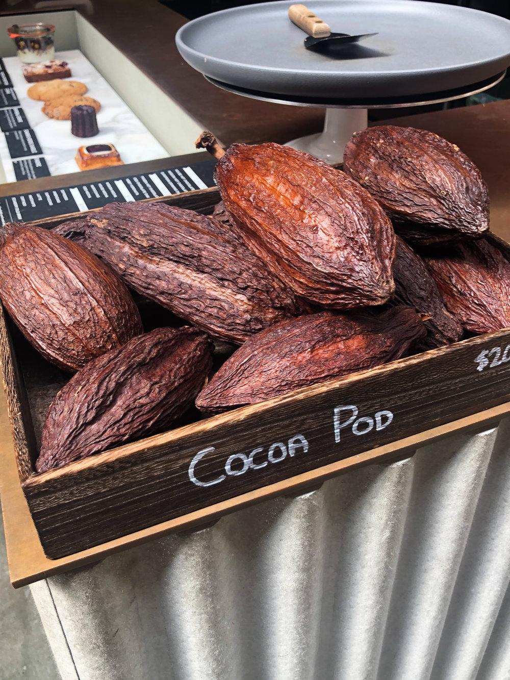 180926_cacao_sanfran-6.jpg