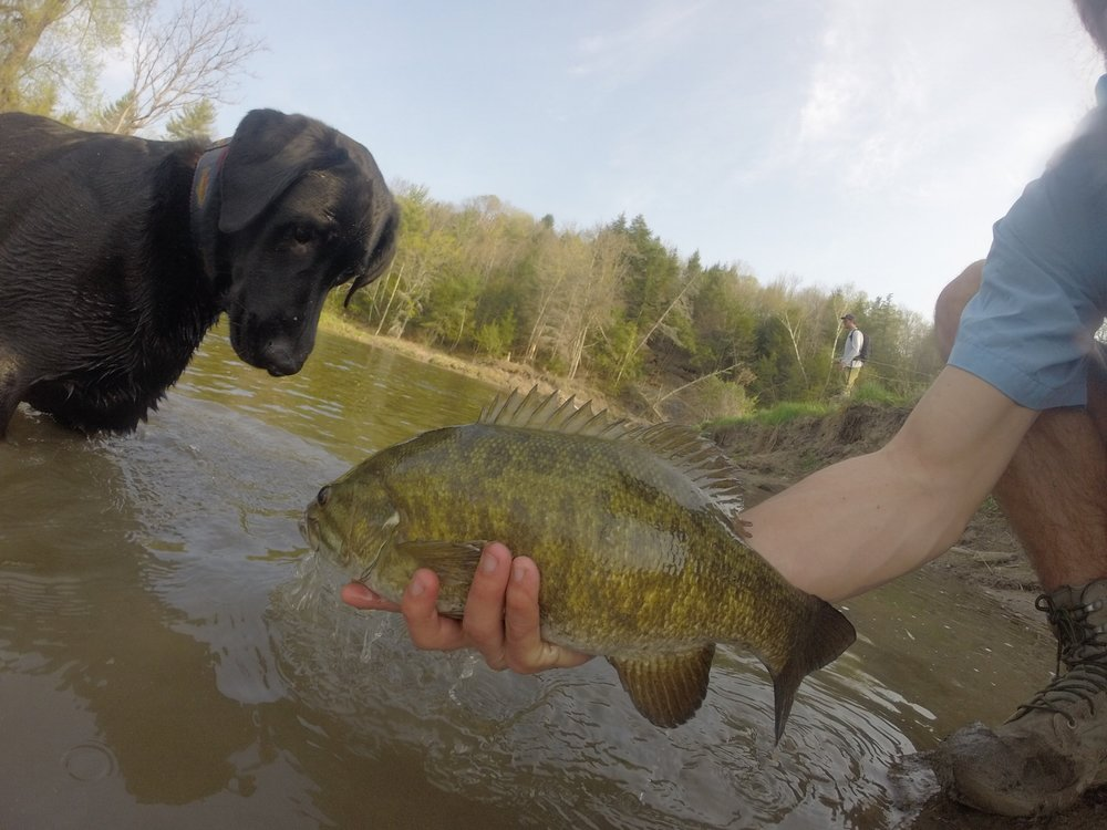 Smallmouth, black dog