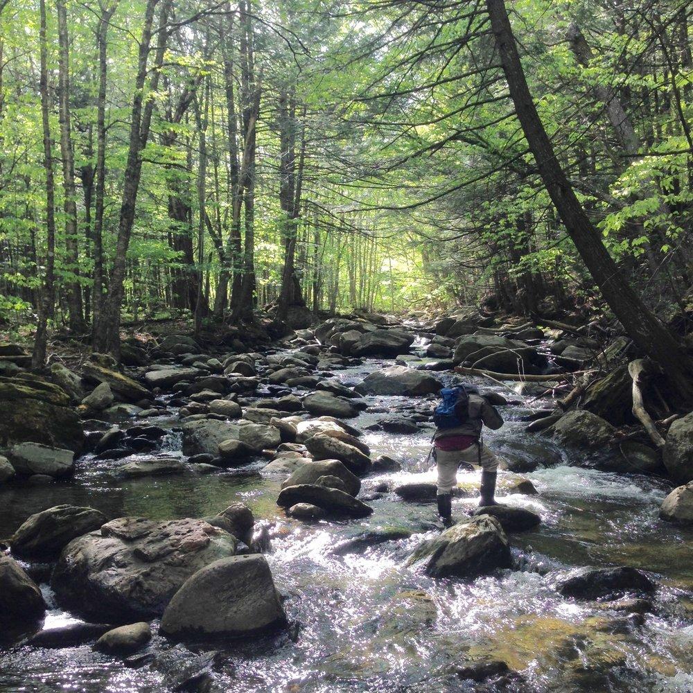 Wild streams, Vermont