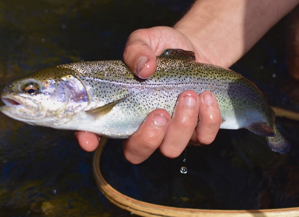 North Branch Potomac Rainbow
