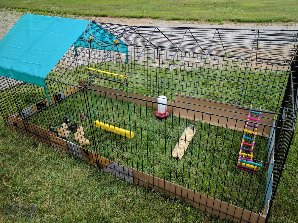 We added cardboard because they fit through the bars still, just barely. A few more days and this will be perfect for them.
