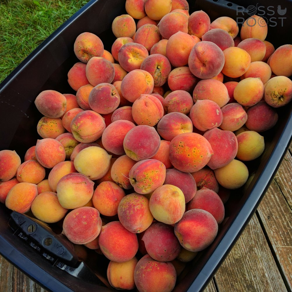 Not quite millions of peaches.