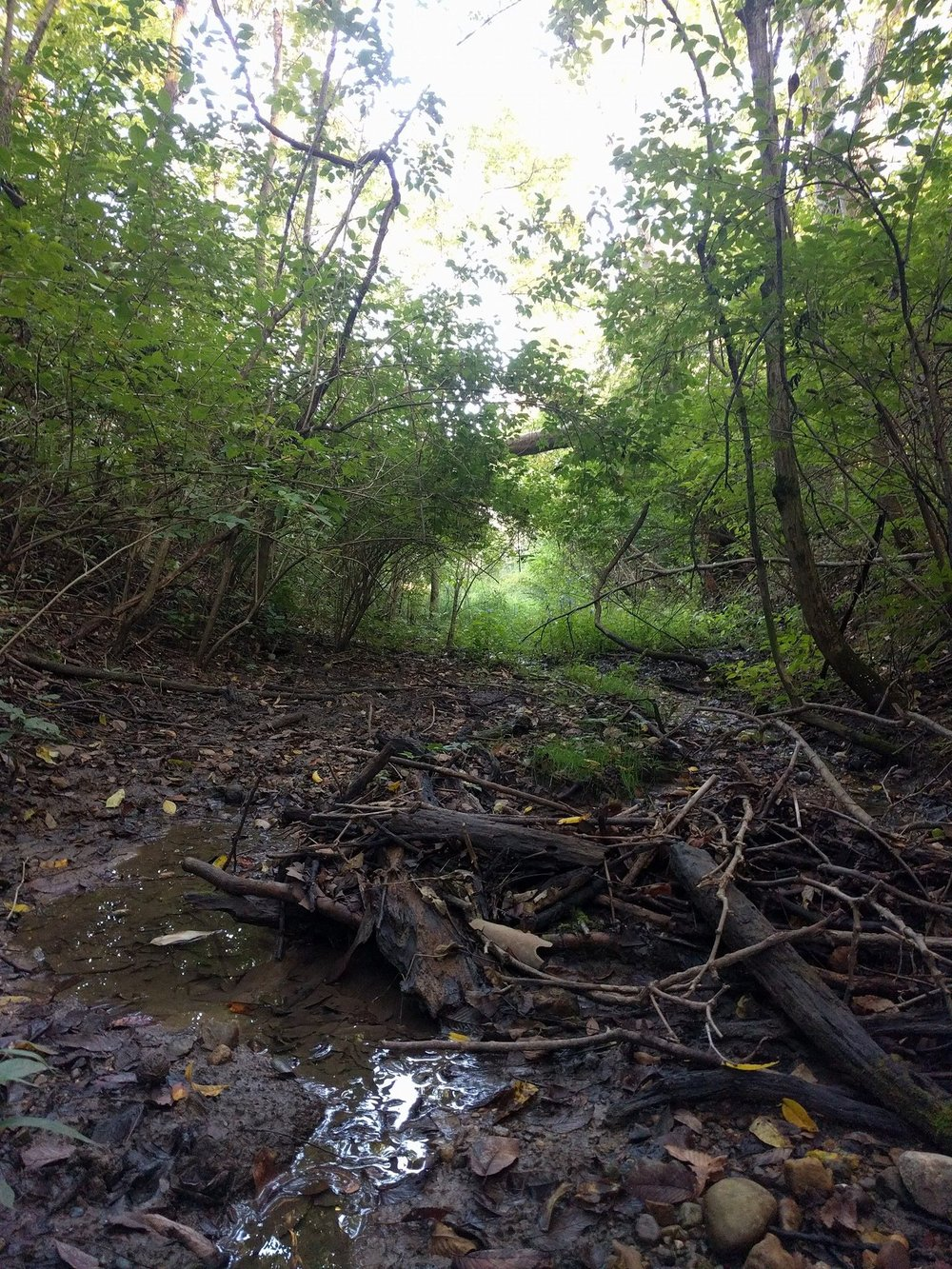 The bottom of the small ravine in our woods.